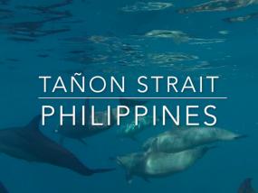 Tañon Strait - BDM