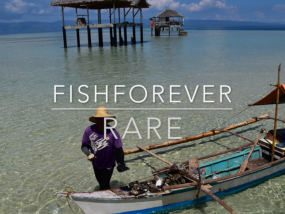 Fishforever-RARE Tañon Strait