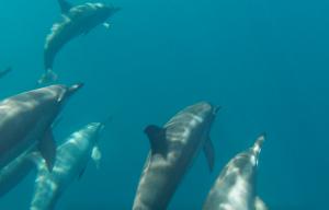 Dolphins Baïs