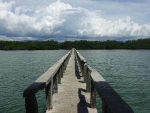mangrove-forest-tanon-strait