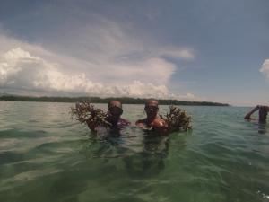 transplanting-corals-tanon-strait