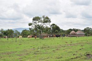 De manier van leven van de Maasai